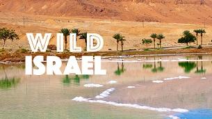 Wild Israel (2016)