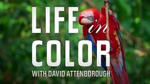 Attenborough's Life in Colour (2021)