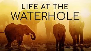Life at the Waterhole (2021)