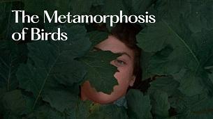 The Metamorphosis of Birds (2021)